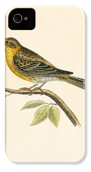 Serin Finch IPhone 4 / 4s Case by English School