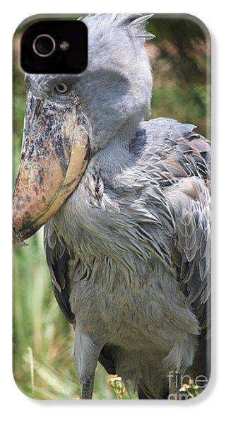 Shoebill Stork IPhone 4 / 4s Case by Carol Groenen