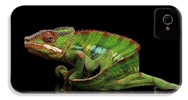 Sneaking Panther Chameleon, Reptile With Colorful Body On Black Mirror, Isolated Background IPhone 4 / 4s Case by Sergey Taran