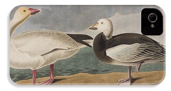 Snow Goose IPhone 4 / 4s Case by John James Audubon