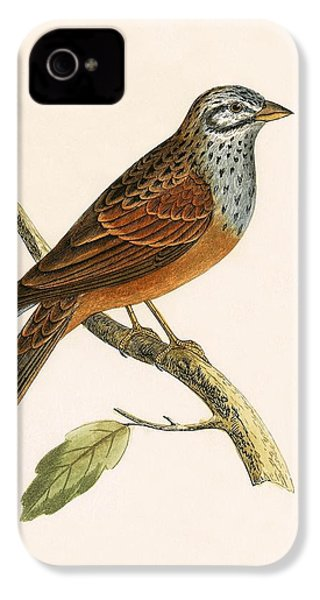 Striolated Bunting IPhone 4 / 4s Case by English School