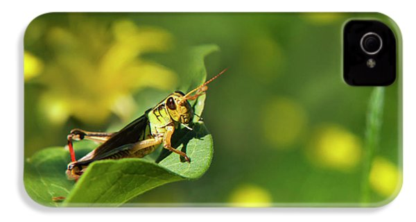 Green Grasshopper IPhone 4 / 4s Case by Christina Rollo