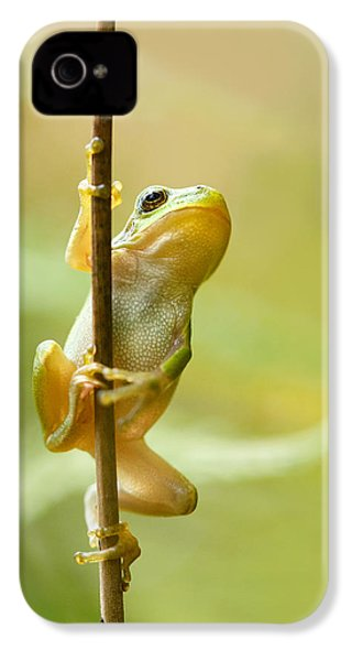 The Pole Dancer - Climbing Tree Frog  IPhone 4 / 4s Case by Roeselien Raimond
