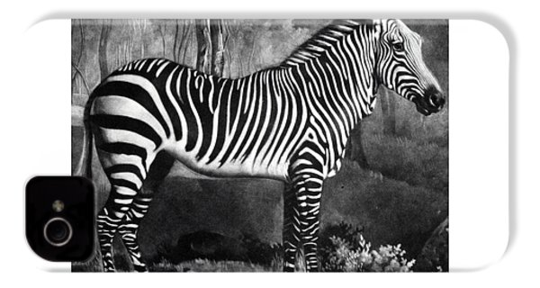 The Zebra IPhone 4 / 4s Case by George Stubbs