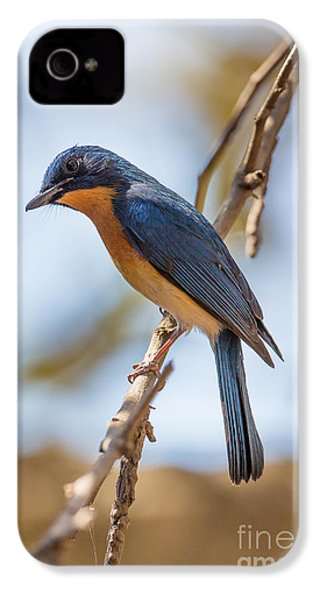 Tickells Blue Flycatcher, India IPhone 4 / 4s Case by B. G. Thomson