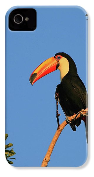 Toco Toucan IPhone 4 / 4s Case by Bruce J Robinson