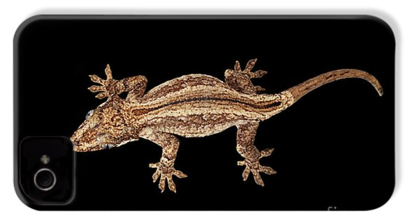 Top View Of Gargoyle Gecko, Rhacodactylus Auriculatus Staring Isolated On Black Background. Native T IPhone 4 / 4s Case by Sergey Taran