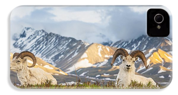 Two Adult Dall Sheep Rams Resting IPhone 4 / 4s Case by Michael Jones