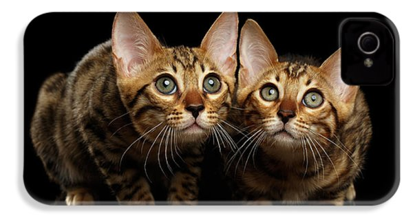 Two Bengal Kitty Looking In Camera On Black IPhone 4 / 4s Case by Sergey Taran