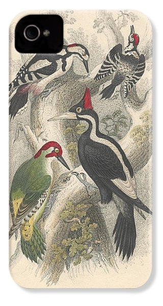 Woodpeckers IPhone 4 / 4s Case by Oliver Goldsmith