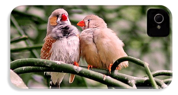 Zebra Finch Colloquy IPhone 4 / 4s Case by Rona Black