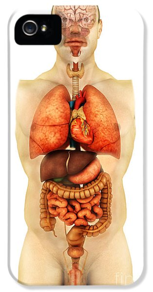 Large Intestine iPhone 5 Cases - Anatomy Of Human Body Showing Whole iPhone 5 Case by Stocktrek Images