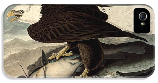 State Bird iPhone 5 Cases - Bald Eagle iPhone 5 Case by John James Audubon