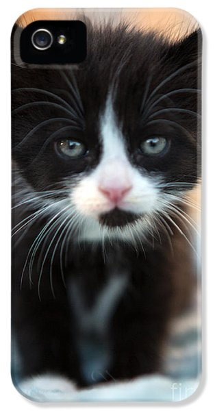 Black Cat iPhone 5 Cases - Blake and white Kitten iPhone 5 Case by Iris Richardson