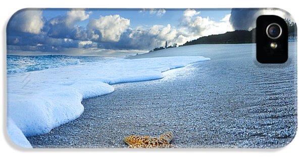 Blue Foam Starfish IPhone 5 / 5s Case by Sean Davey