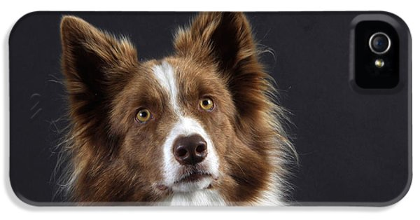 Canid iPhone 5 Cases - Border Collie Dog iPhone 5 Case by Christine Steimer