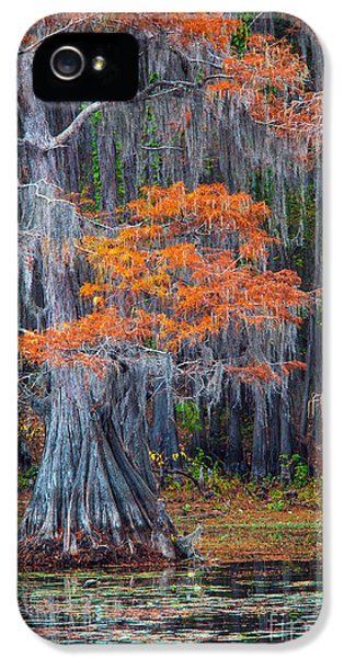 Bayou iPhone 5 Cases - Caddo Lake Fall iPhone 5 Case by Inge Johnsson