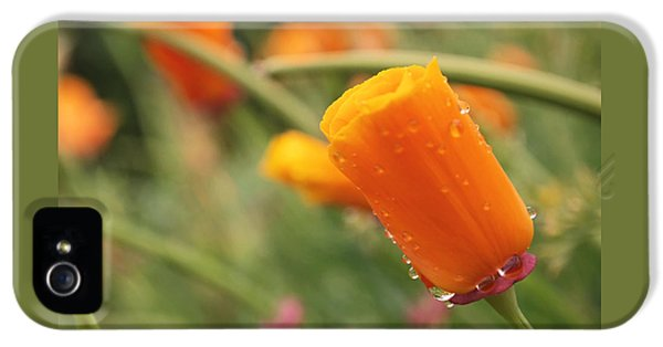 California Poppies IPhone 5 / 5s Case by Rona Black