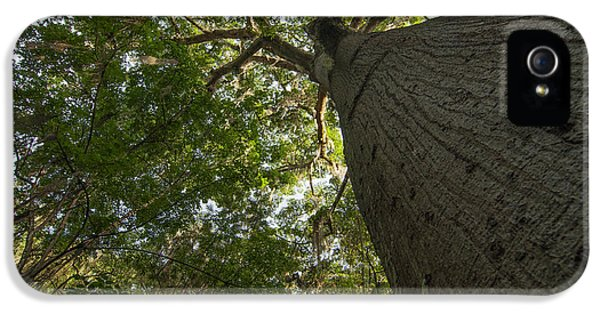 Gil iPhone 5 Cases - Ceiba Tree iPhone 5 Case by Jess Kraft