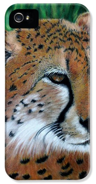 Cheetah IPhone 5 / 5s Case by Carol McCarty