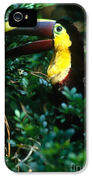 Chestnut-mandibled Toucan IPhone 5 / 5s Case by Art Wolfe