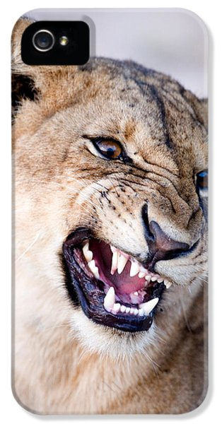 Anger iPhone 5 Cases - Close-up Of A Lioness Panthera Leo iPhone 5 Case by Panoramic Images