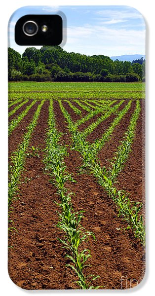 Agricultural iPhone 5 Cases - Cultivated Land iPhone 5 Case by Carlos Caetano