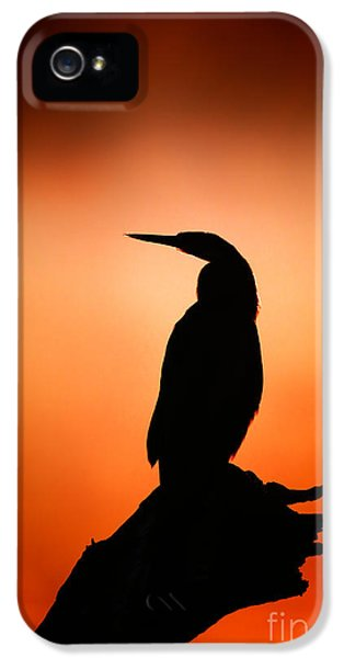 Backlight iPhone 5 Cases - Darter silhouette with misty sunrise iPhone 5 Case by Johan Swanepoel