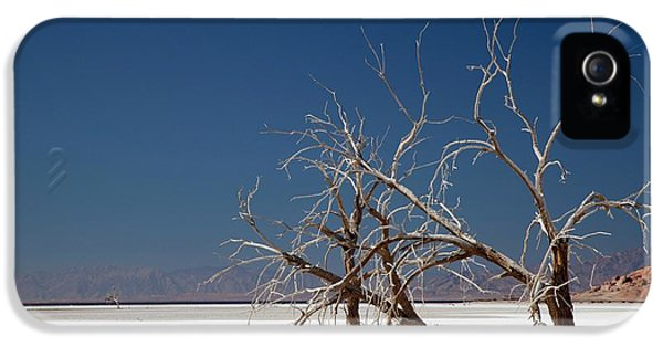 Dead Trees On Salt Flat IPhone 5 / 5s Case by Jim West