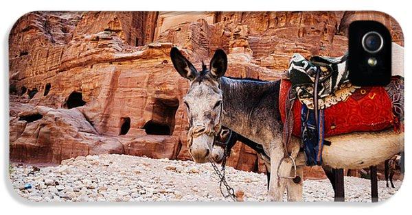 Donkey iPhone 5 Cases - Donkey iPhone 5 Case by Jelena Jovanovic