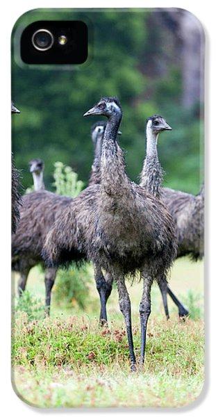 Emu (dromaius Novaehollandiae IPhone 5 / 5s Case by Martin Zwick