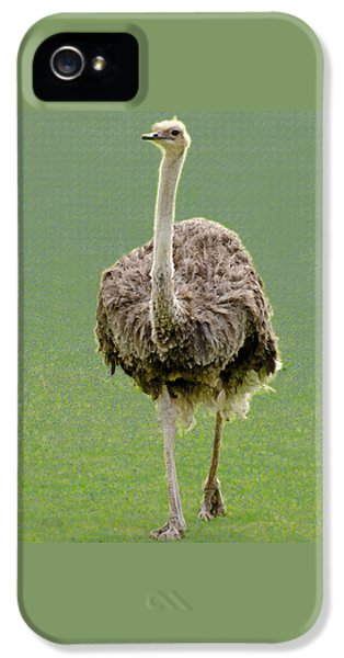 Emu IPhone 5 / 5s Case by Ellen Henneke