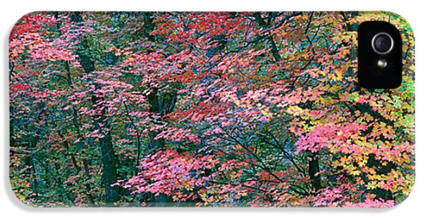 Fourth Of July iPhone 5 Cases - Fall Colors At Fourth Of July Canyon iPhone 5 Case by Panoramic Images