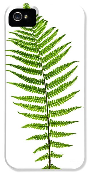 Leaf iPhone 5 Cases - Fern leaf iPhone 5 Case by Elena Elisseeva