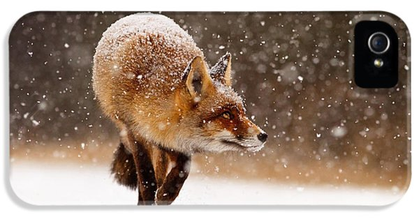 Red Fox iPhone 5 Cases - Fox First Snow iPhone 5 Case by Roeselien Raimond