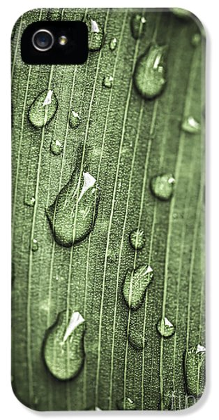 Dewdrop iPhone 5 Cases - Green leaf abstract with raindrops iPhone 5 Case by Elena Elisseeva