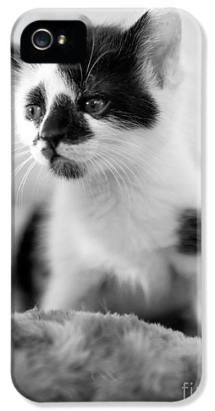 Black Cat iPhone 5 Cases - Kitten dreaming iPhone 5 Case by Iris Richardson