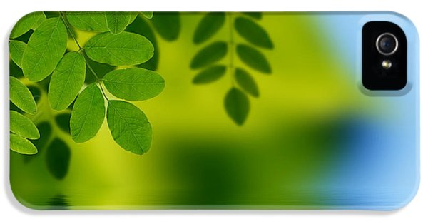 Eco iPhone 5 Cases - Leaves reflecting in water iPhone 5 Case by Aged Pixel