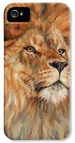 Lion iPhone 5 Cases - Lion iPhone 5 Case by David Stribbling
