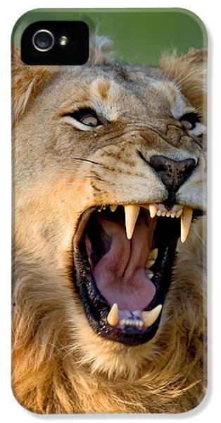 Lion IPhone 5 / 5s Case by Johan Swanepoel