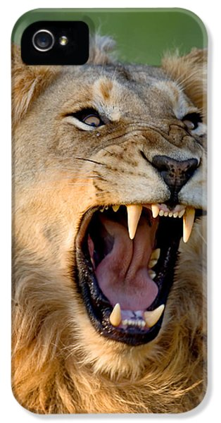 Scary iPhone 5 Cases - Lion iPhone 5 Case by Johan Swanepoel