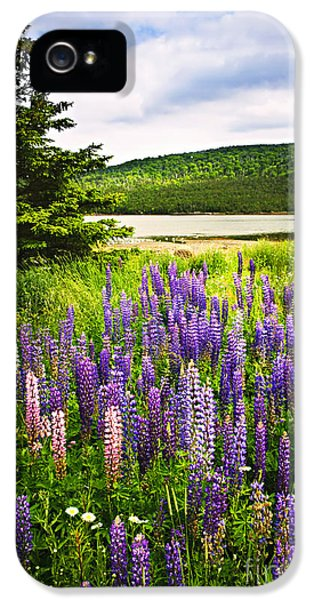 Lupine iPhone 5 Cases - Lupin flowers in Newfoundland iPhone 5 Case by Elena Elisseeva