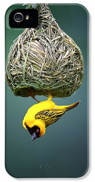 Blur iPhone 5 Cases - Masked weaver at nest iPhone 5 Case by Johan Swanepoel