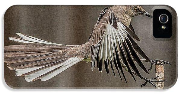 Mockingbird  IPhone 5 / 5s Case by Rick Barnard