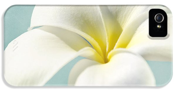 Yellow And White Plumeria Flower Frangipani iPhone 5 Cases - My hope carries me . . .  iPhone 5 Case by Sharon Mau