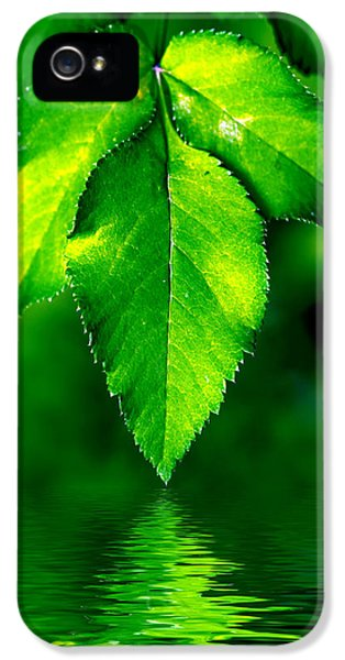 Leaf iPhone 5 Cases - Natural leaves background iPhone 5 Case by Michal Bednarek