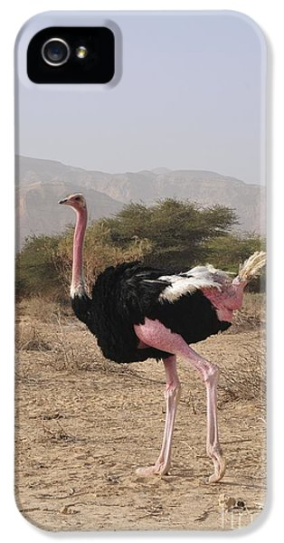 Ostrich In A Nature Reserve IPhone 5 / 5s Case by PhotoStock-Israel