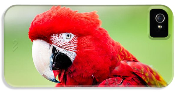 Zoo iPhone 5 Cases - Parrot iPhone 5 Case by Sebastian Musial