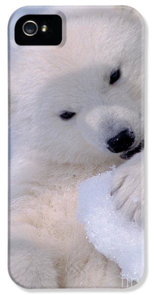 Polar Bear Cub IPhone 5 / 5s Case by Mark Newman