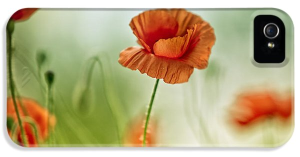 Many iPhone 5 Cases - Poppy Meadow iPhone 5 Case by Nailia Schwarz